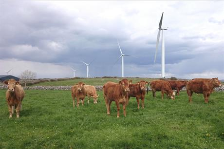 Irish consumers are not paying a heifer-ty sum (pic credit: Statkraft)