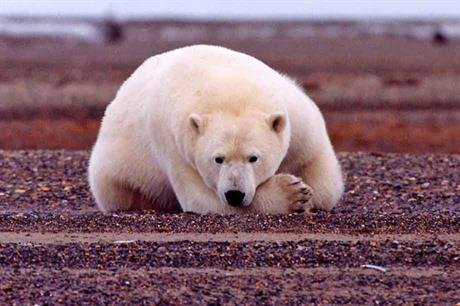 Climate change… Doubts over its existence melted along with Arctic ice (pic: Susanne Miller, US Fish and Wildlife Service)