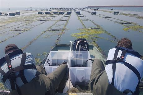 There is a shortage of sites for large-scale seaweed farming (pic: seaweedharvestholland)