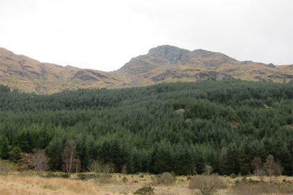 FCS land near Loch Long, western Scotland