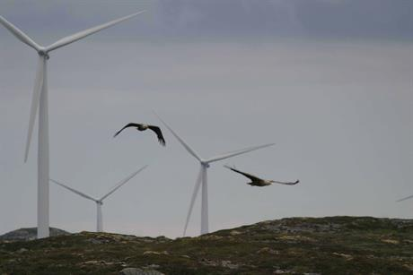 The American Wind Wildlife Institute has set up a new fund to back research projects looking into wind turbine effects on wildlife (pic: Oregon State University / Todd Katzner, US Geological Society)