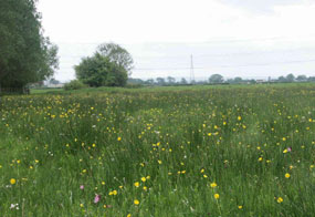 Nature sites: 22 organisations will share the funding