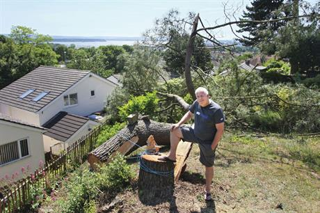 Steve Bransgrove: protected pine was illegally felled by neighbour
