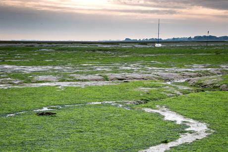 An algal bloom on the Solent shore - image: Julian Dodd