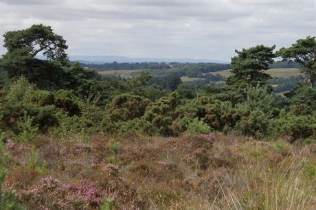 Ashdown Forest: protected area at heart of council's decision