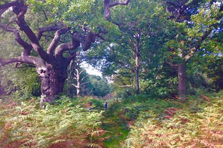 Epping Forest. Image by G Travels, Flickr