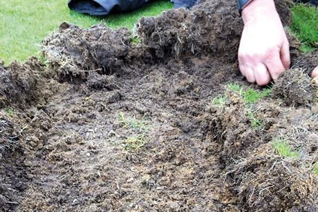 Leatherjacket and chafer grub: how to prevent leatherjacket and chafer grub problems