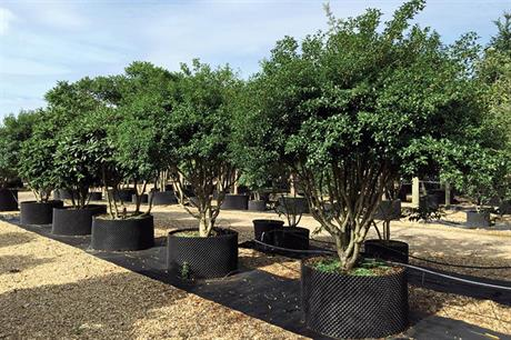 How British tree nurseries are developing in 2021