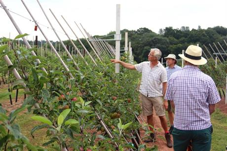 Can better-designed orchards increase productivity?