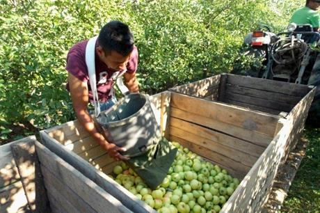 Buoyant demand for UK apples but frost and labour remain concerns