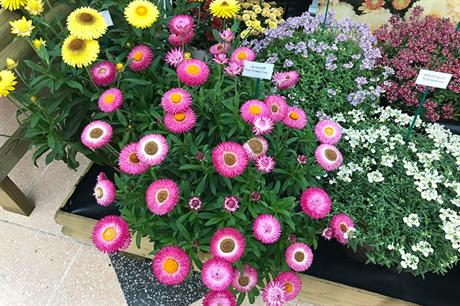 What are the garden centre best products and trends from Glee?