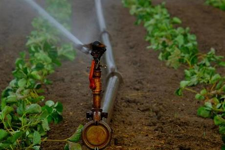 What can growers do now to prepare for potential water shortages ahead?
