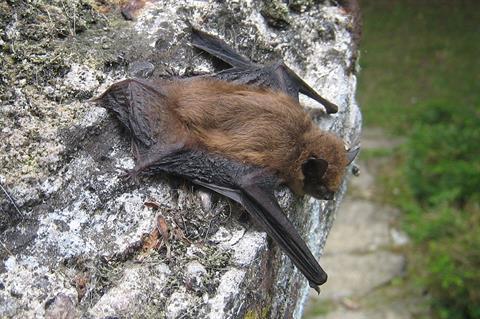 Wind turbines 'attract' EU-protected bats
