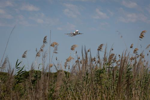 In-depth: Airlines pin green hopes on sustainable aviation fuel