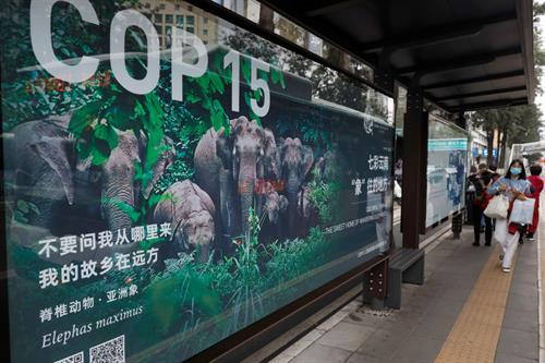 The Road to Kunming: Europe talks big on biodiversity