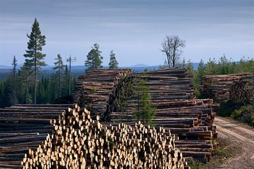 Campaigners appeal in court case over EU support for wood burning