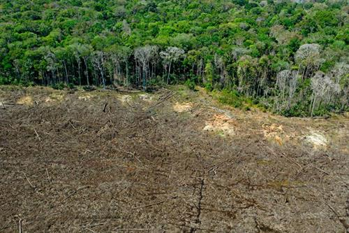 MEPs urged to act as sixth mass extinction event looms