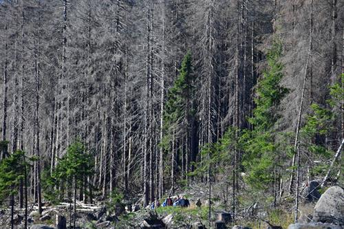 Europe's forests in decline, official figures show