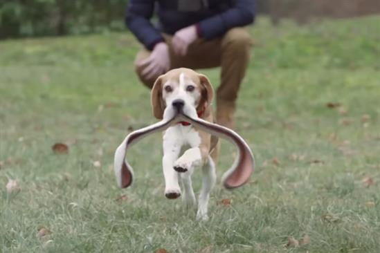 Peugeot: 2017 ad features sloppy yet lovable dog