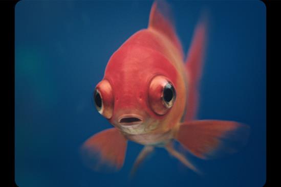 "Mercedes-Benz ""Blowfish"" by Antoni"