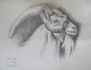 Drawing by General Sir David Richards for Kids for Kids charity auction