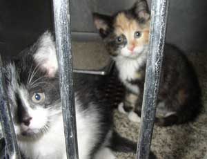 RSPCA rescues mistreated animals