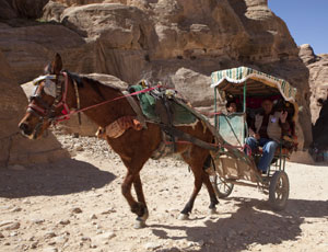 Hard work: a horse pulling tourists in the Middle East