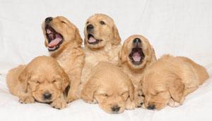 It's a bit of a yawn...