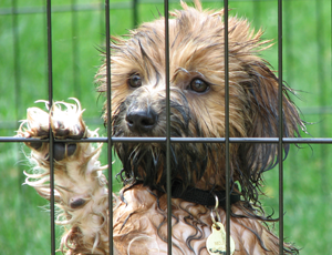 RSPCA rescues neglected animals