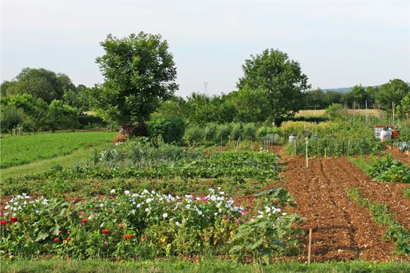 Allotments: part of Keep Wales Tidy brief