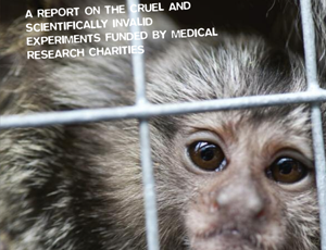 Animal Aid's report