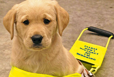 A guide dog