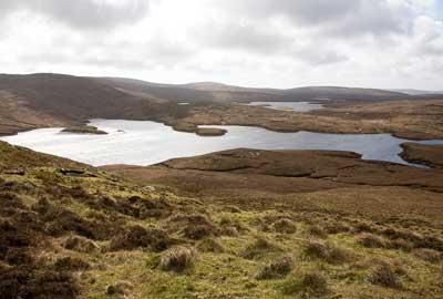 The Shetlands