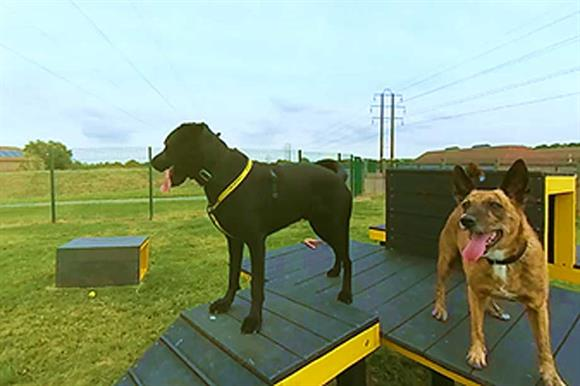 Potential Donors To The Dogs Trust Will Now Be Able See Work That Goes On In Charitys Rehoming Centres Through A New Virtual Reality Experience