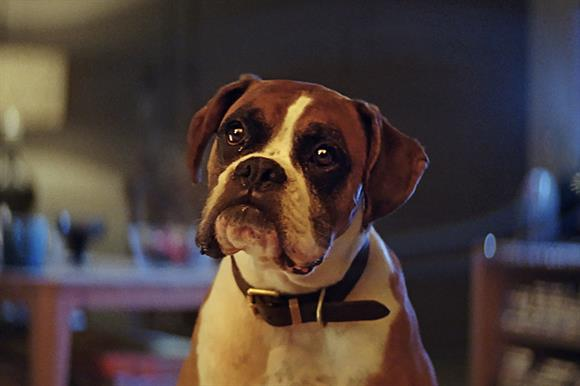 Buster the Boxer