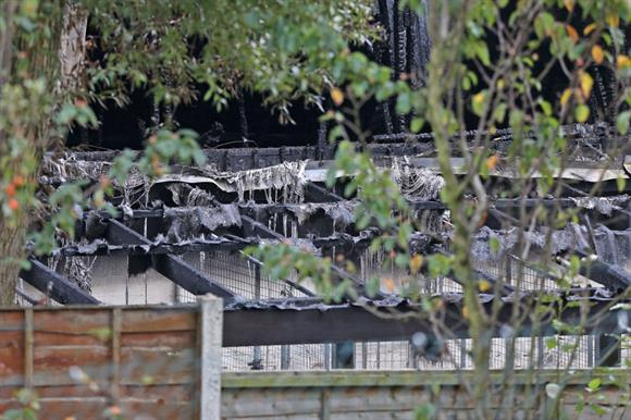 Manchester Dogs' Home after the fire