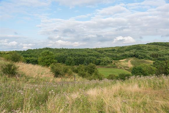 Battlestead Hill, Staffordshire – part of the National Forest (picture by Diana Jarvis)