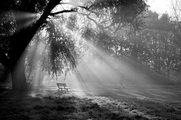 Putney Common: charitable land