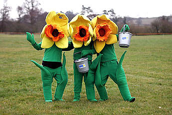 Marie Curie Cancer Care daffodils