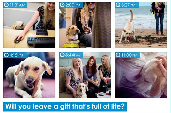 Part of the Guide Dogs legacy campaign