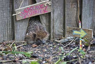 RSPB's Giving Nature a Home campaign