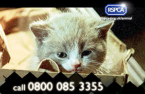 Poppy the kitten, who has been dumped in an alleyway and left to starve in the RSPCA's new television advert
