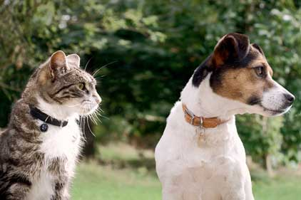 PDSA: agency will support campaigns on pet well-being
