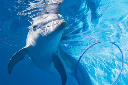 Visit St Petersburg Clearwater: famous for dolphins