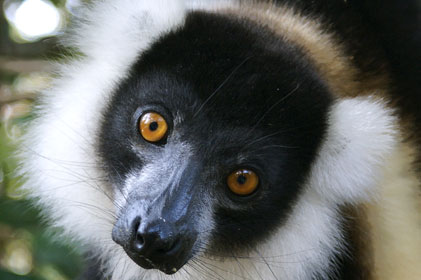 Madagascar Tourism appoints McCluskey International
