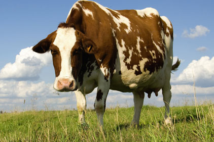Veterinary medicine: Animalcare Group