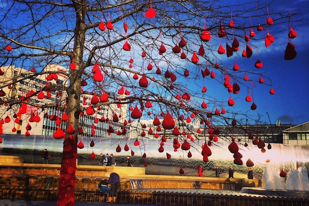 Knitted blood drops hanging from a tree in Sheffield