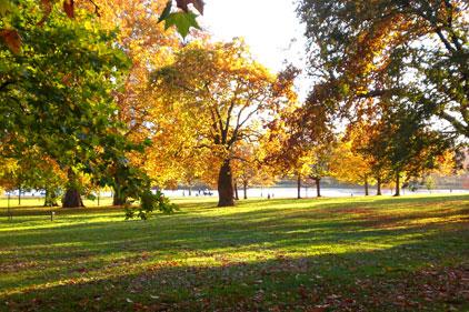 Parks: seeking revamps