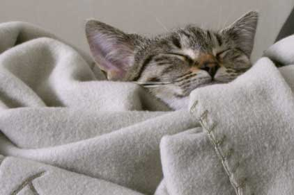 Metacam: can treat cats with arthritis