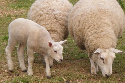 Animal health brief: win for WAR